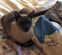 Siamese cat Spock prefers Ann's clothes to blankets.
